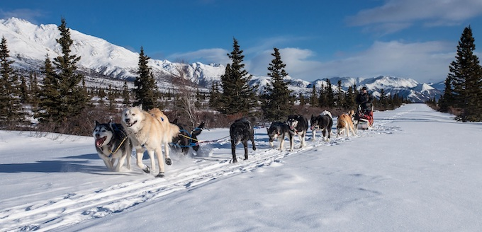 Iditarod Dog Sled Race [Alaska Slot Machine Casino Gambling in 2019]
