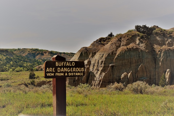 Buffalo are Dangerous Sign [North Dakota Slot Machine Casino Gambling in 2020]