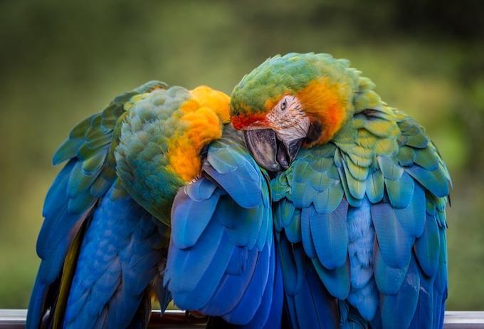 Parrots Cuddling [Puerto Rico Slot Machine Casino Gambling in 2020]