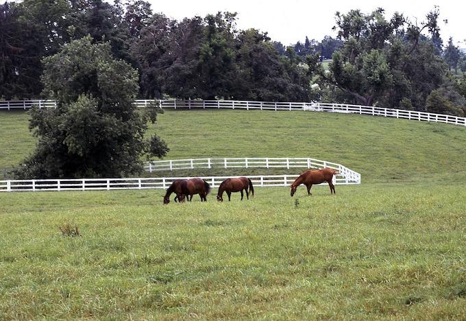 Kentucky Slot Machine Casino Gambling: Kentucky and the horse racing industry.