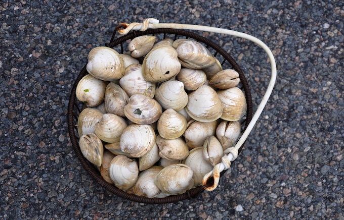 Bucket of Cape Cod Clams [Massachusetts Slot Machine Casino Gambling 2018]