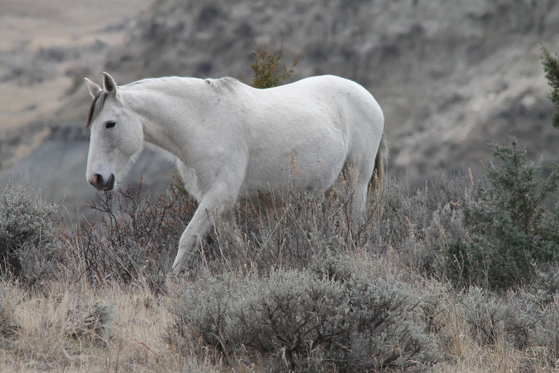 Wild horses in North Dakota and North Dakota Slot Machine Casino Gambling.