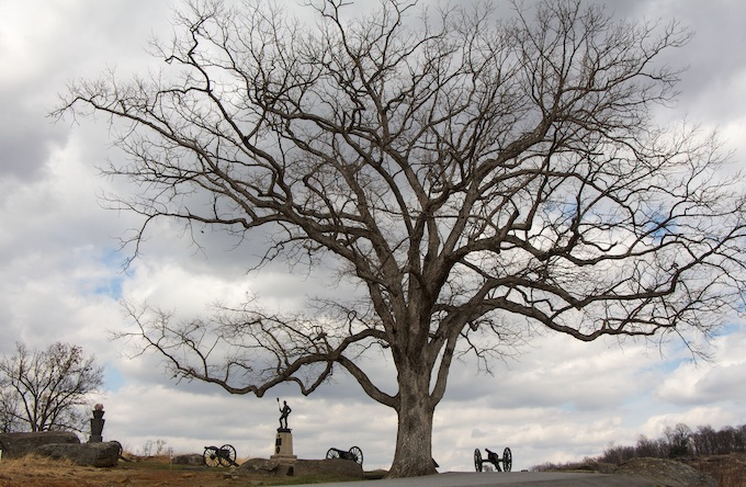 Old Oak Tree at Gettysburg Battlefield [Pennsylvania Slot Machine Casino Gambling 2019]