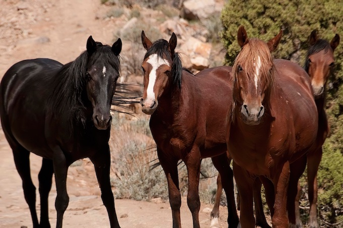 Wild Mustangs [Nevada Slot Machine Casino Gambling in 2020]