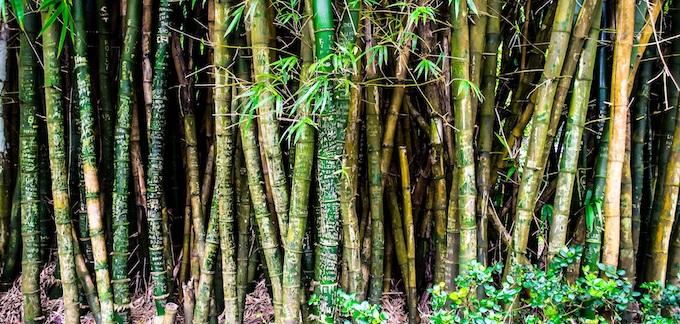 Bamboo Stand [Hawaii Slot Machine Casino Gambling in 2021]