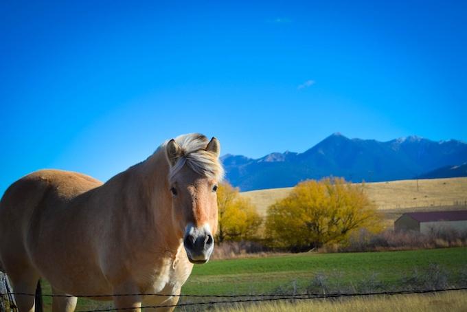 A Horse? In Montana? [Montana Slot Machine Casino Gambling in 2021]